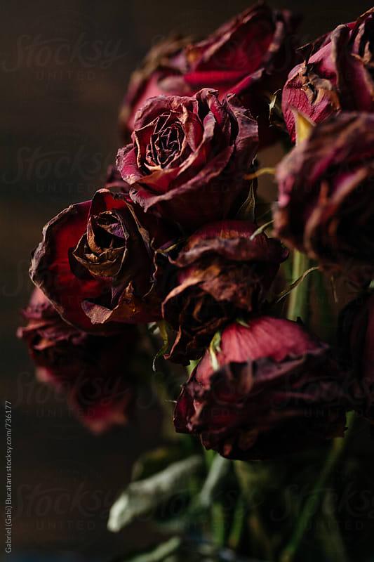 Wilted crimson roses in a vase by Gabriel (Gabi) Bucataru for Stocksy United