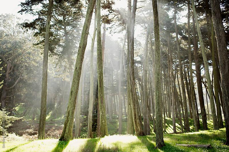 Tree Rays by Bethany Olson for Stocksy United