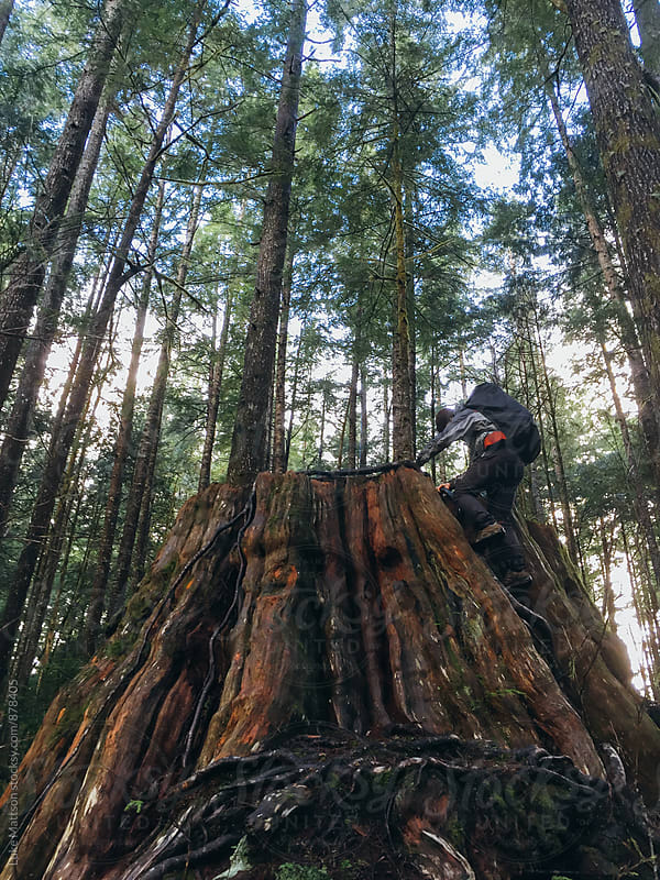Climbing An Old Cedar Stump by Luke Mattson for Stocksy United