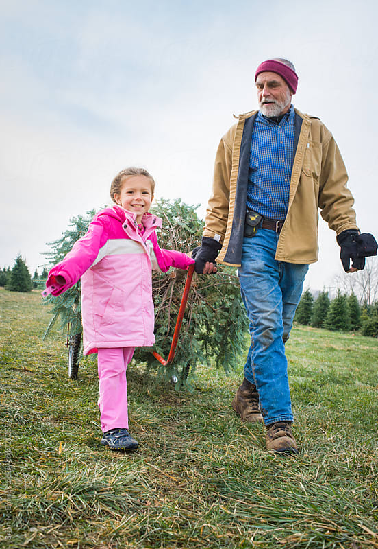 Christmas Tree: Grandfather and Granddaughter Pull Fresh Cut Tree by Brian McEntire for Stocksy United