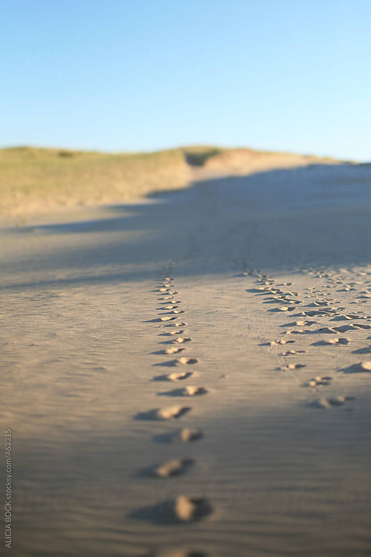 Footprints Across A Sand Dune At Sunrise by ALICIA BOCK for Stocksy United
