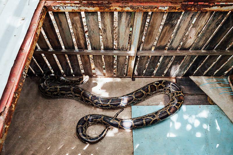 Snake by Sam Burton for Stocksy United