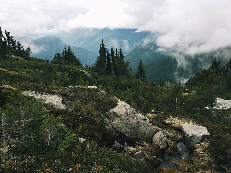 Alpine Mountain Hiking Trail in the Washington Cascades by michelle edmonds for Stocksy United