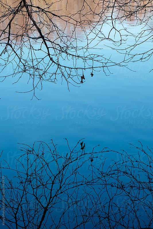 Tree limbs reflecting surface of blue pond by Kerry Murphy for Stocksy United