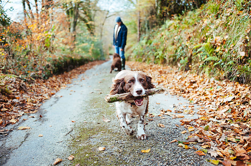 Dog carrying a stick in its mouth by Suzi Marshall for Stocksy United