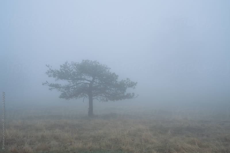 Single evergreen tree in the fog by Brkati Krokodil for Stocksy United