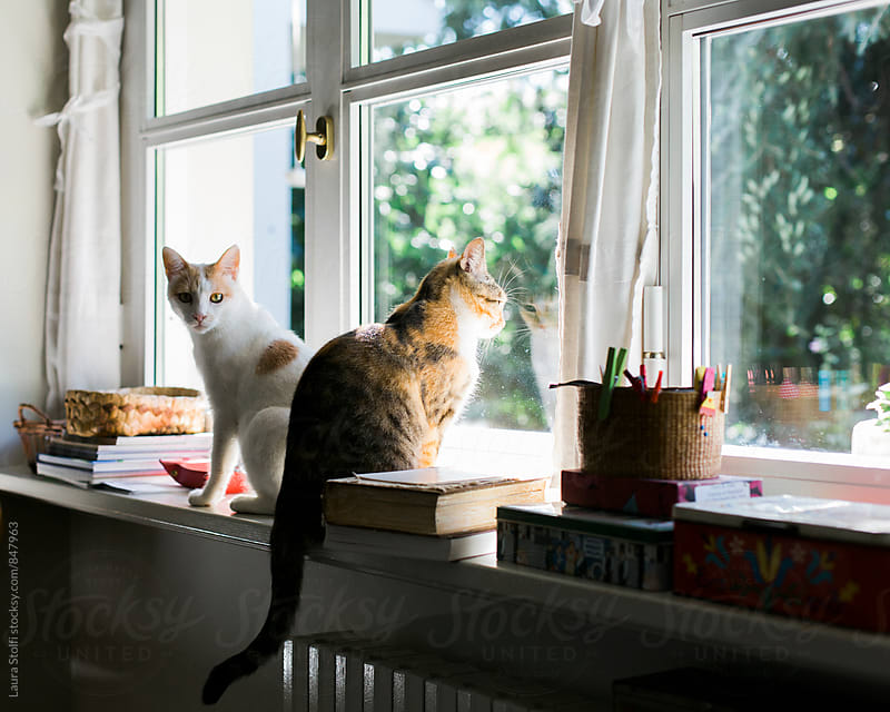 Two cats sit on windowsill: one cat looks straight at camera, one cat looks out of the window by Laura Stolfi for Stocksy United