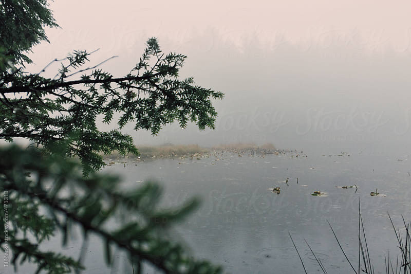 A foggy lake seen through the forest  by TJ Macke for Stocksy United