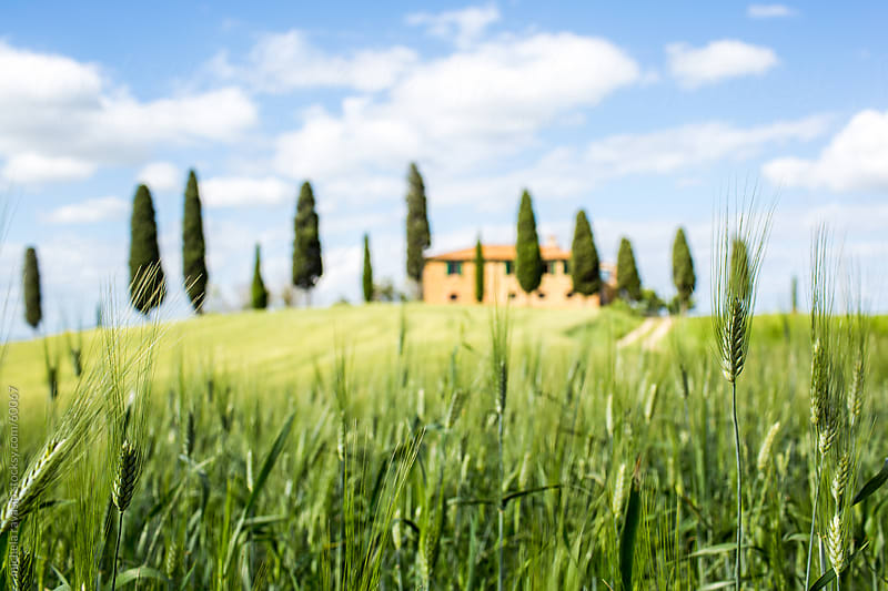 Farm on the Tuscan hills by michela ravasio for Stocksy United