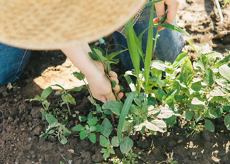 Girl working on farm weeding around flower seedlings by Deirdre Malfatto for Stocksy United