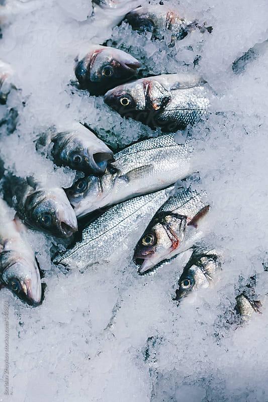 Fish on market stall by Borislav Zhuykov for Stocksy United