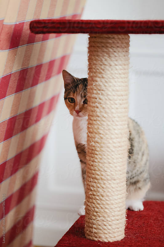 Tabby cat sitting on scratching post by Laura Stolfi for Stocksy United