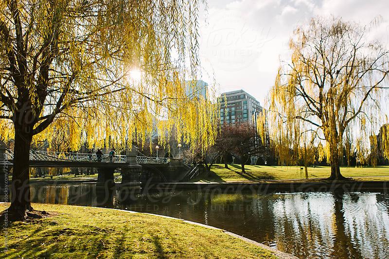 Boston Public Garden in Autumn Season by Raymond Forbes LLC for Stocksy United