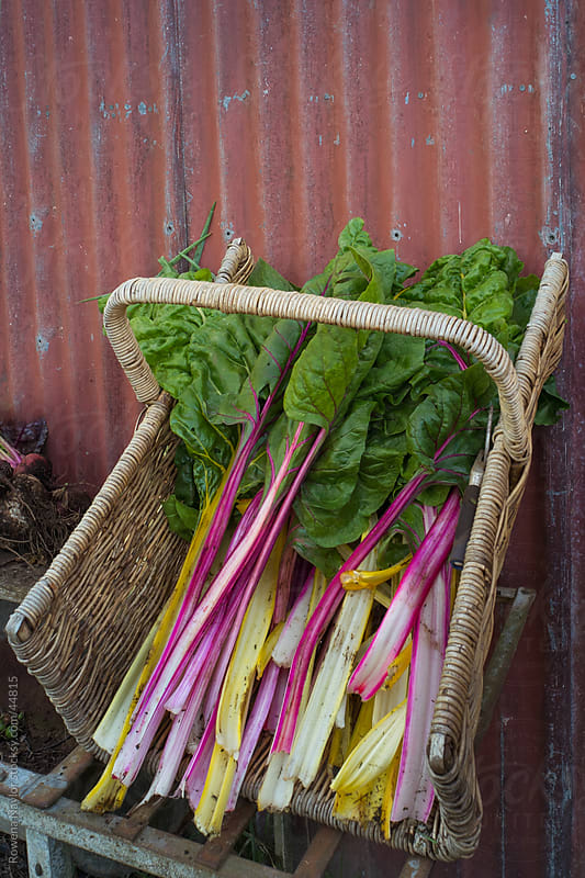 Organic Swiss Chard Spinach by Rowena Naylor for Stocksy United