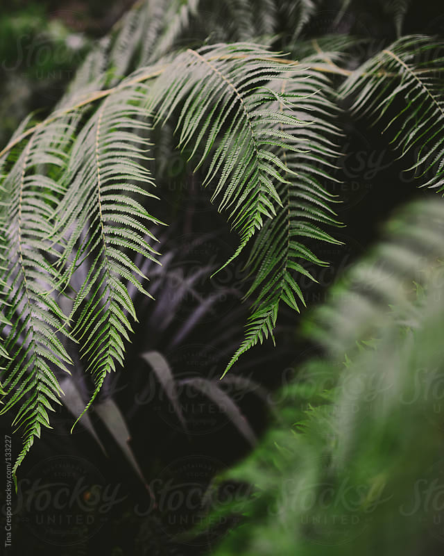 Natural Ferns by Tina Crespo for Stocksy United