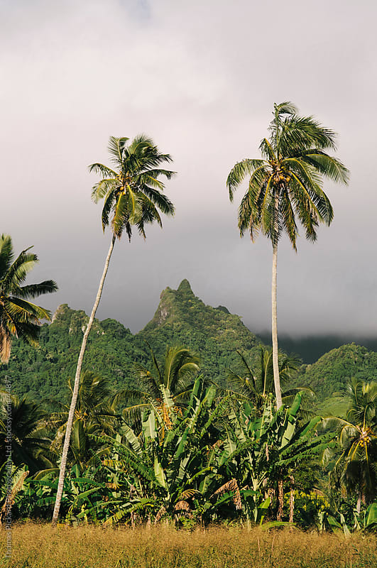 Mountainous interior of Rarotonga Island, Cook Islands. by Thomas Pickard Photography Ltd. for Stocksy United