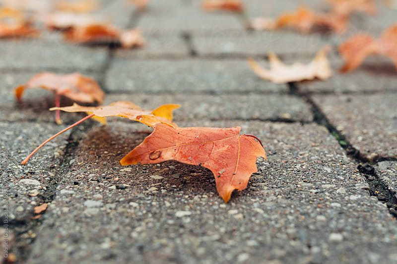 Autumn leaves on a sidewalk by Gabriel (Gabi) Bucataru for Stocksy United