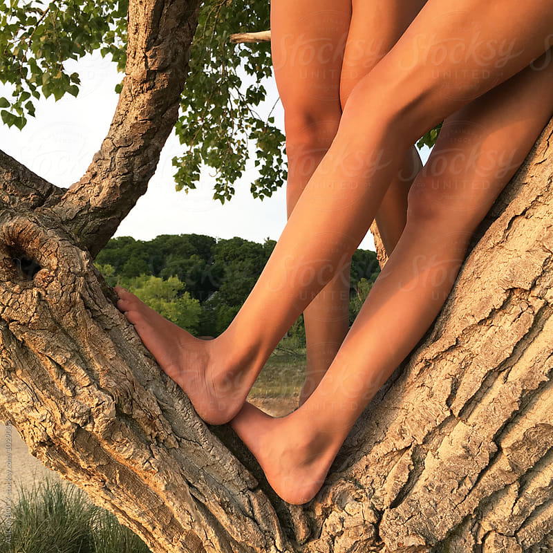 The Legs Of Teen Girls Climbing A Tree At Sunset by ALICIA BOCK for Stocksy United