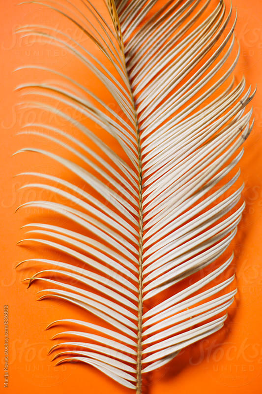 Palm leaf on a orange background - vertical by Marija Kovac for Stocksy United