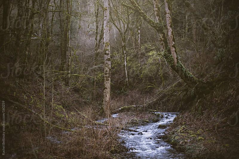 A stream runs through sparse winter woods by Rachel Bellinsky for Stocksy United