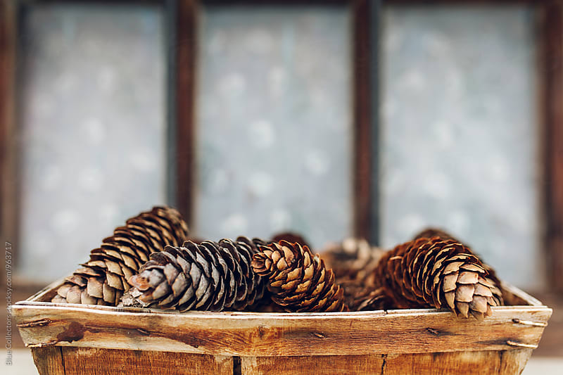 Wicker basket full of pine cones in the window by Jordi Rulló for Stocksy United