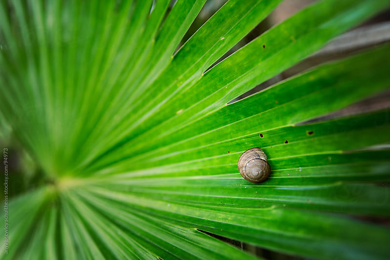 Small snail on a vibrant green leaf by anya brewley schultheiss for Stocksy United