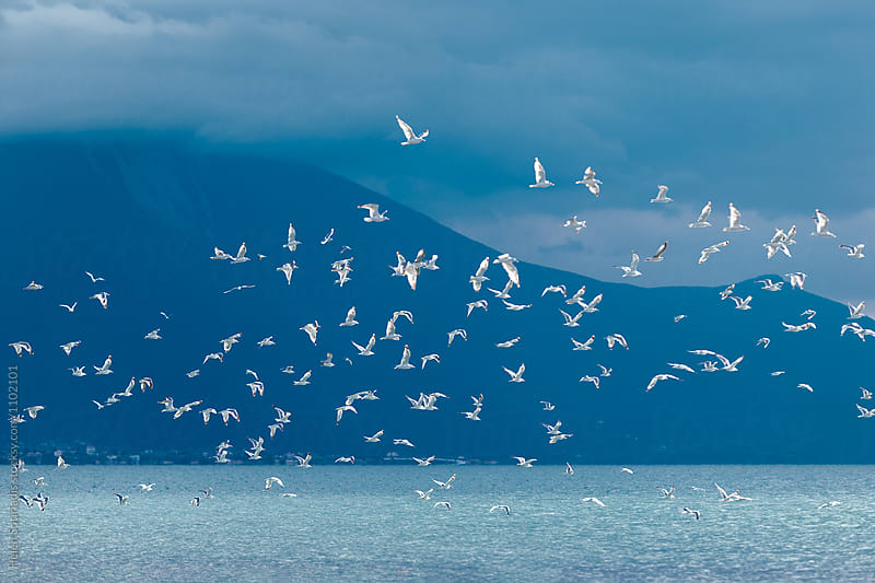 A Flock of Birds over Water