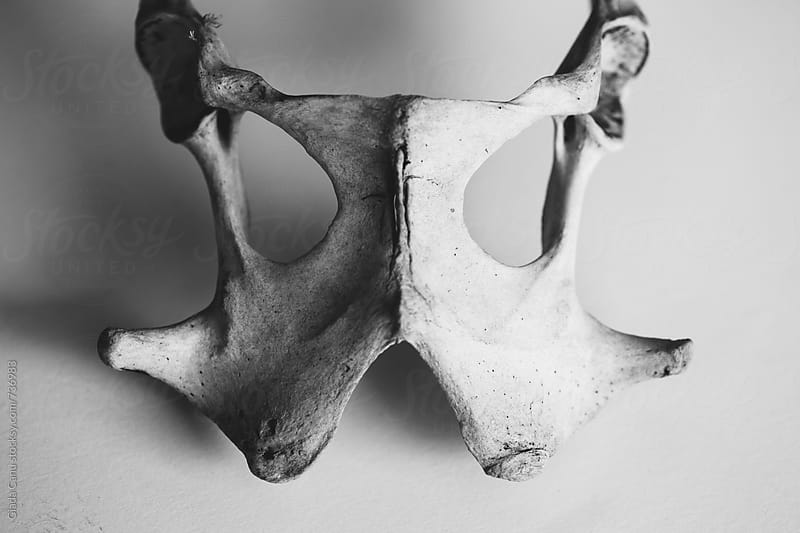 Animal bones by Giada Canu for Stocksy United