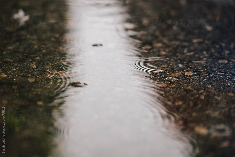 small rain droplets hitting a puddle  by Sarah Lalone for Stocksy United