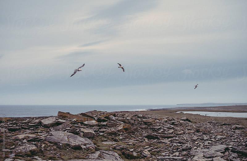 bird flying over ocean cliffs in scotland by Jan Bijl for Stocksy United