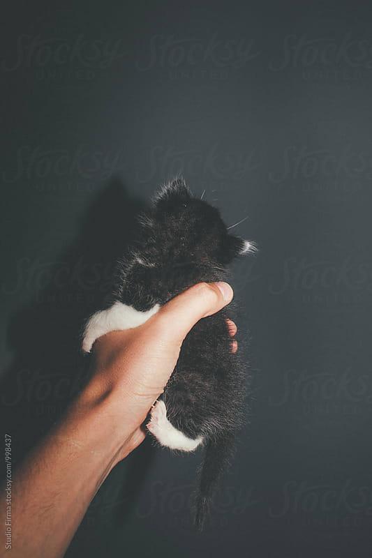 Kitten  by Studio Firma for Stocksy United