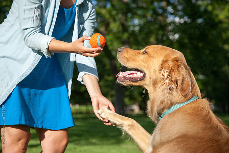 Girl Training Dog with Ball. by K. Howard for Stocksy United