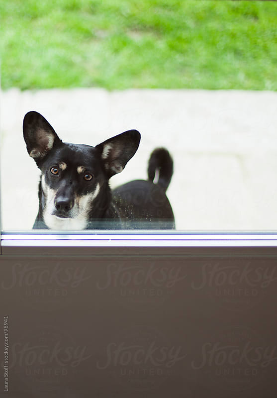 Black crossbreed dog waits out of glass door in order to enter home by Laura Stolfi for Stocksy United