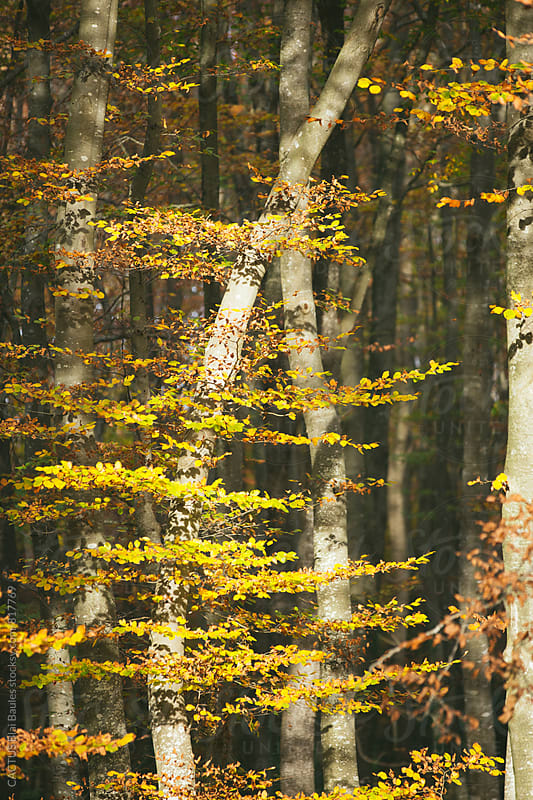 Leaves with autumn colors by Blai Baules for Stocksy United
