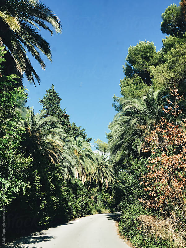 Streets with palm trees  by Maja Topcagic for Stocksy United