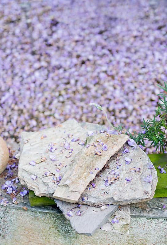 Rocks with purple petals  by Lawren Lu for Stocksy United