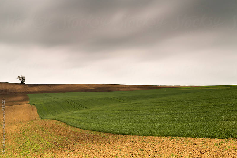 Cropland in South Moravia on a cloudy day by Marilar Irastorza for Stocksy United