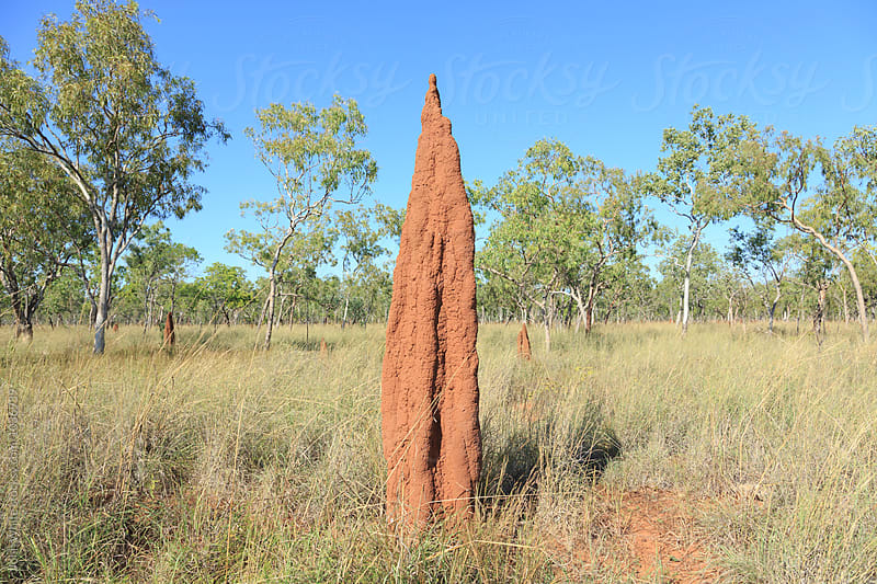 Termite Mound. Northern Territory. Australia. by John White for Stocksy United