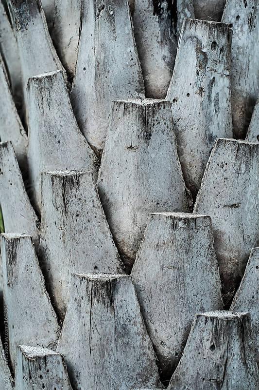 Closeup of a Palm Cortex by Marija Savic for Stocksy United