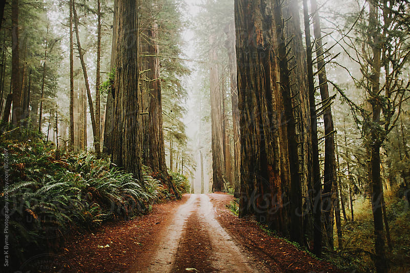 Redwood path by Sara K Byrne Photography for Stocksy United