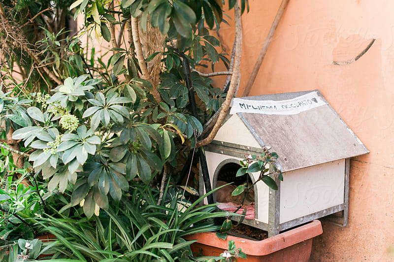Small Cat House Sitting in a Planter by Briana Morrison for Stocksy United