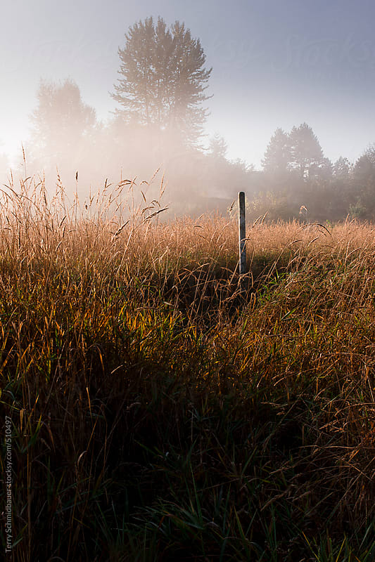 Marsh Landscape by Terry Schmidbauer for Stocksy United