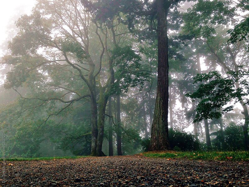 Foggy Park Morning by Eric Bowley for Stocksy United