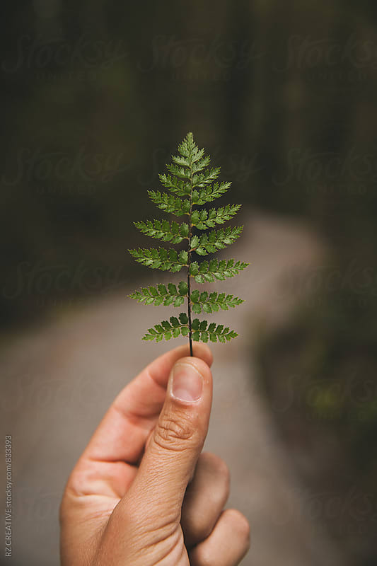Fern in spring. by RZ CREATIVE for Stocksy United