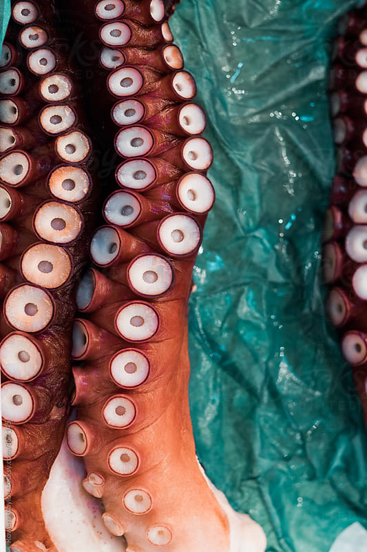 Fresh Octopus at Tsukiji Market, Tokyo Fish Market by Rowena Naylor for Stocksy United