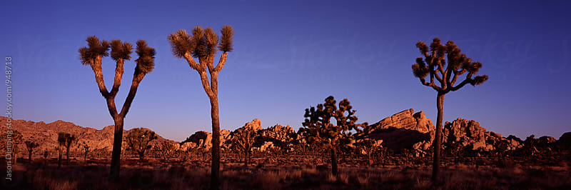 joshua Tree National Park by Jason Denning for Stocksy United