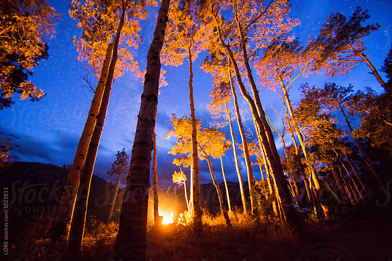 Summer campfire in a clearing in aspen forest on camping trip by LORE for Stocksy United