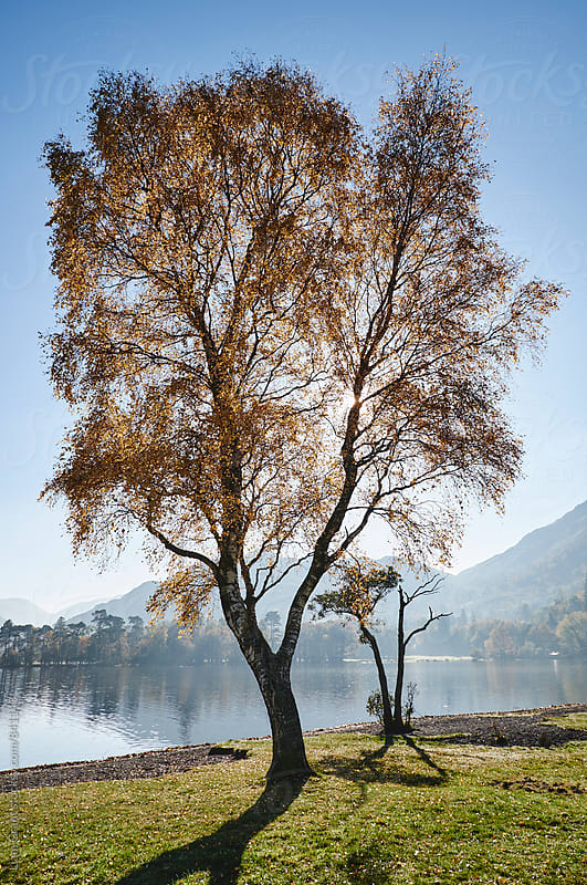Sunlight through autumnal tree. Ullswater, Cumbria, UK. by Liam Grant for Stocksy United