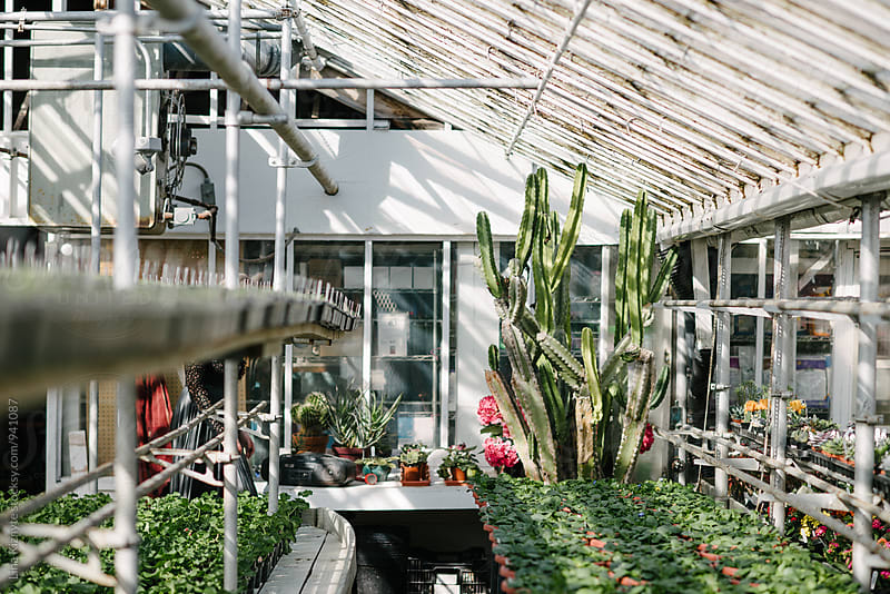 Greenhouse by Lina Kiznyte for Stocksy United
