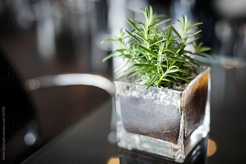 a green fern in a glass vase by Helen Sotiriadis for Stocksy United